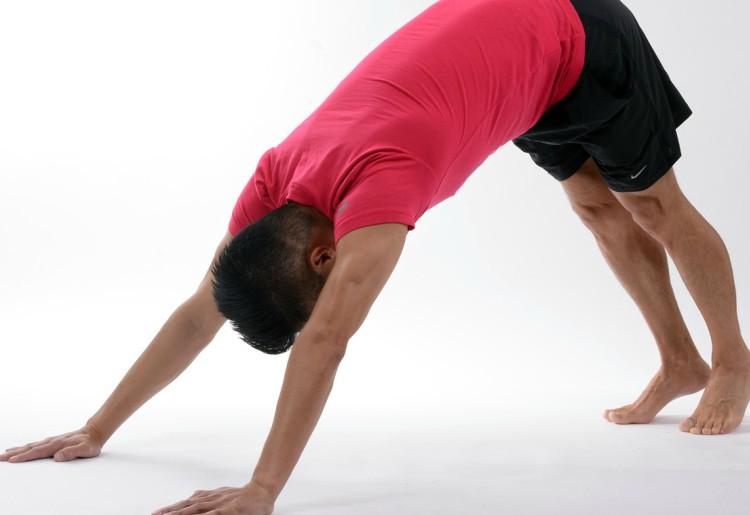 Le catene muscolari,l'importanza di avere un corpo elastico in un mondo flessibile